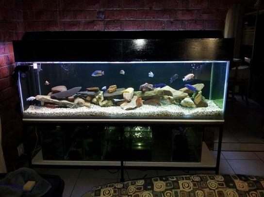 200 Gallon Aquarium Spec