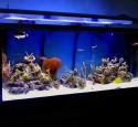 300 Gallon Aquarium Diy