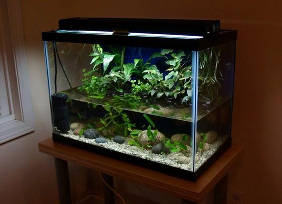 Tall 20 Gallon Aquarium
