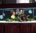 200 Gallon Discus Aquarium