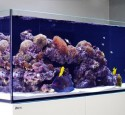 Rimless Aquarium Screen Top