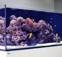Rimless Aquarium Screen Top