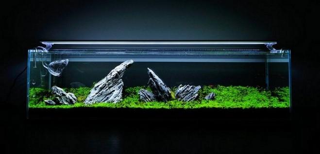 Rimless Aquarium Design