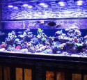 200 Gallon Aquarium Ideas