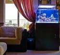 Rimless Aquarium Image