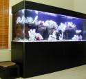 300 Gallon Aquarium With Stand