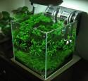 Rimless Planted Aquarium