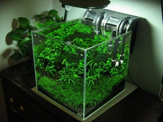 Rimless Planted Aquarium