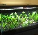 20 Gal Long Aquarium