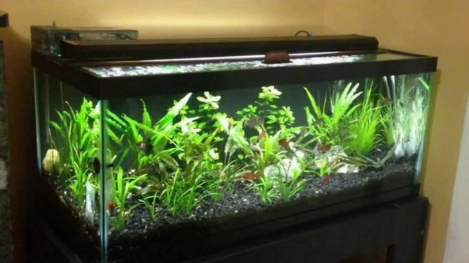 20 Gal Long Aquarium