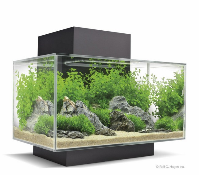 Aquarium 200 Gallon A Vendre