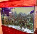 Tenecor 300 Gallon Aquarium