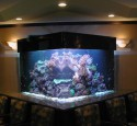 200 Gallon Glass Aquarium
