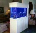 200 Gallon Saltwater Aquarium Kit