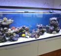 300 Gallon Reef Aquarium Setup