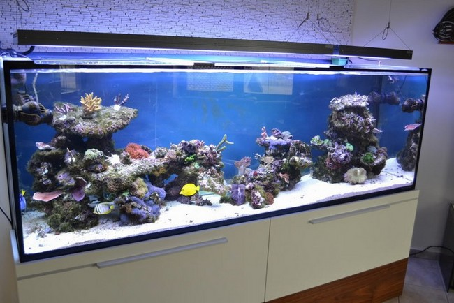 Maintenance Of 300 Gallon Aquarium