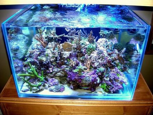 Rimless Aquarium Cube