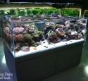 Cool Rimless Aquarium