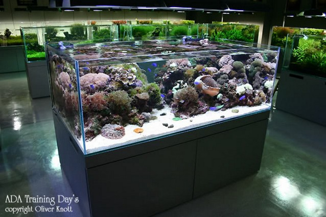 Cool Rimless Aquarium