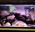 Ideas 20 Gallon Long Aquarium