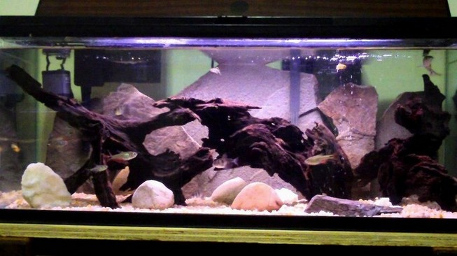 Ideas 20 Gallon Long Aquarium